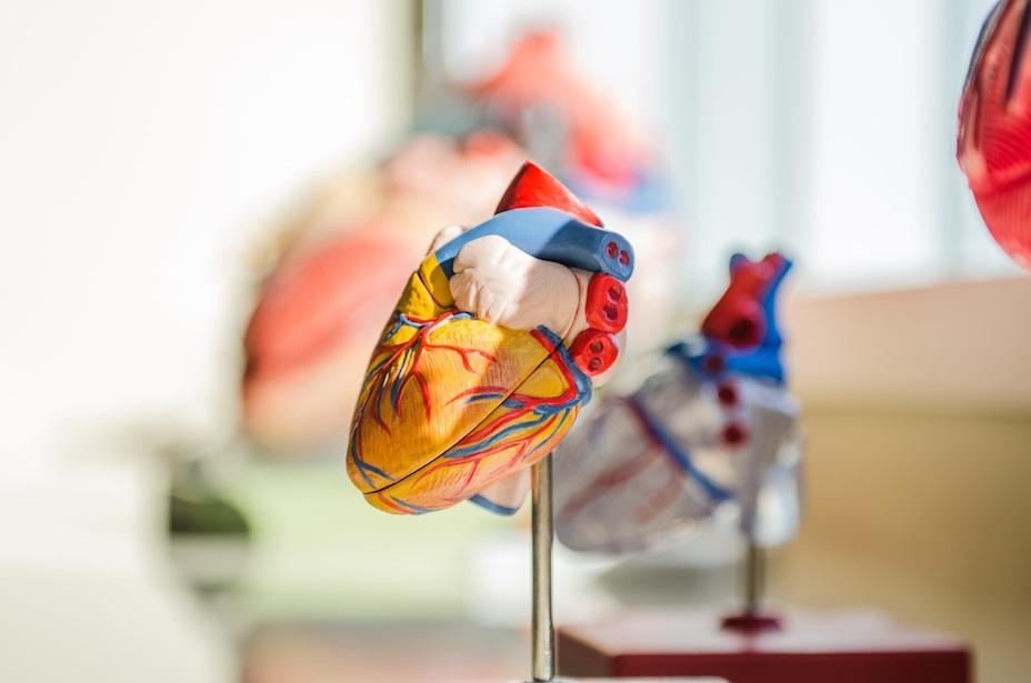 Herzgesundheit Mineralien